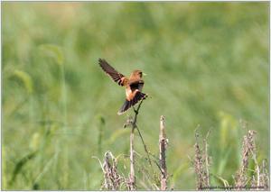 野鳥の素顔 <野鳥と日々の出来事>