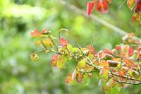 秋色に染まる - ささつぶ