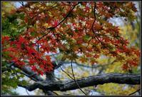 秋の散策 - 好い加減に過ごす2