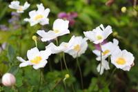 今日の庭はなぜか白 - 日々の宝物その2