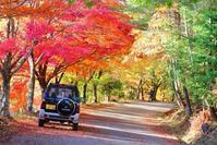 ♫奥三河の紅葉(タカドヤ湿地など) - 野風の部屋