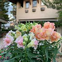 春のお花たちの入荷です♪♪ - ブレスガーデン Breath Garden 大阪・泉南のお花屋さんです。バルーンもはじめました。