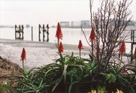 羽田~2020年3月4 - 散歩日和