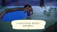 【Switch】「あつ森」超レア魚「ゴールデントラウト」と「イトウ」釣りに挑む!! - ゲームに漫画、時々看護師