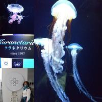 癒しの水族館 - ふうりゅう日記