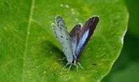霜降霜始降(しもはじめてふる) - 紀州里山の蝶たち