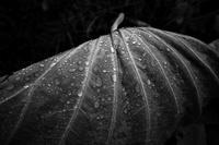 季節を変える雨が降る20201024 - Yoshi-A の写真の楽しみ
