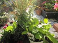 今日の庭仕事は - 花の自由旋律
