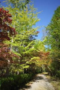 紅葉見頃までもう少し - yoshiのGR散歩
