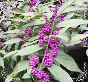 秋の花 - 自然のアルバム2