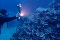 20.10.25浮原(うきばる)へ!! - 沖縄本島 島んちゅガイドの『ダイビング日誌』