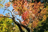 秋の古道ハイキング・・・早谷峠とサケビ峠 - 朽木小川より 「itiのデジカメ日記」 高島市の奥山・針畑からフォトエッセイ
