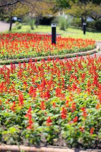 秋の植物 - 休日PHOTOブログ