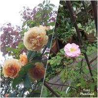 2020.10月 庭の花 - 「旅とアロマのナビゲーター」     アロマセラピストまえだゆーこのブログ