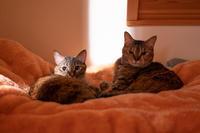 起こしてゴメンね - 猫と夕焼け