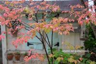 秋色楽しむ庭~♪ - azumiの夢まど