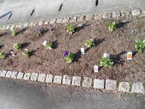 お花は和みますね - メディカ倉敷北 公式ブログ