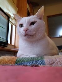 猫こたつ始め - 雑記帳~信州の東のほうで。
