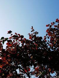 展示会最終日~秋晴れ - くらしのギャラリーちぐさ