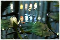 夜に咲く睡蓮 -  one's  heart