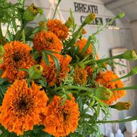 最近流行りのオレンジのお花といえば??笑 - ブレスガーデン Breath Garden 大阪・泉南のお花屋さんです。バルーンもはじめました。