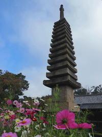 秋桜 4奈良県 - ty4834 四季の写真Ⅱ