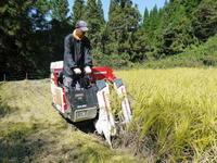 米作りの挑戦(2020)稲刈りの様子!今年の問題点と来年へむけての課題!(前編) - FLCパートナーズストア