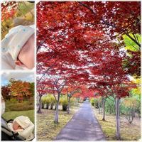 平岡樹芸センターの紅葉 - 気ままな食いしん坊日記2