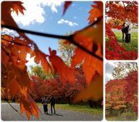 札幌市真駒内公園の紅葉♪ - 気ままな食いしん坊日記2