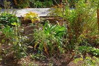我が家の庭 - へたっぴぃ