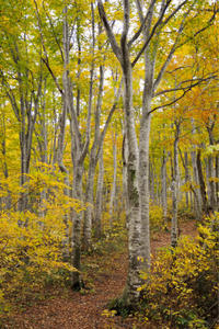 紅葉の森 - 松之山の四季2