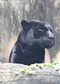 2020年9月王子動物園5その2 - ハープの徒然草