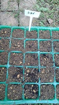 野菜の種まき - ウィズ(ゼロ)コロナのうちの庭の備忘録~Green's Garden~