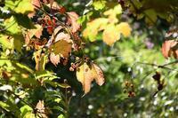 秋晴れの一日 - ささつぶ