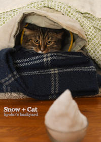 10月の雪と猫 - Kyoko's Backyard ~アメリカで田舎暮らし~