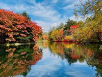 久しぶりの雲場池 - 旧軽井沢より  つるや旅館からのお便り