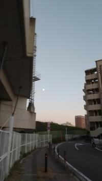 今朝は星がたくさん見えた - 続マシュービ日記