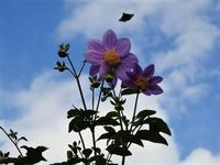 花と蝶~♪ - 私の息抜き(^o^)
