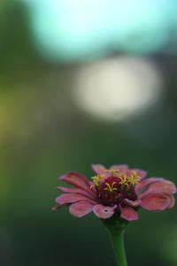 余韻を求めて空中庭園 - meの写真はザンス