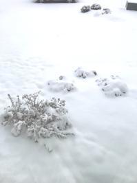 雪休み - 今、楽しいことについて。