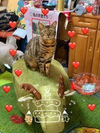 アリョーシャ王子生誕4周年♥ - ♪天使たちの優雅な生活♪