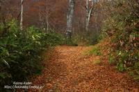 落ち葉の道-照葉峡 ⑥ - - 風の彩りー3