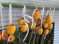 干し柿 - さかえのファミリー