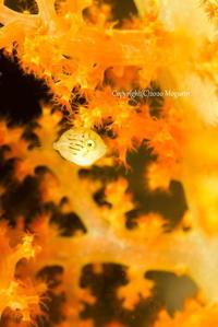 紅葉 - Diving Life ~Aita pe'a pe'a~