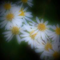 ある日の記憶から・・ - 花々の記憶  happy momo