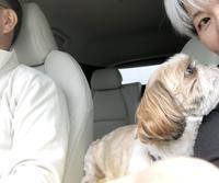 犬と一緒に軽井沢へ ♪ - 鮮やかな色に魅せられて