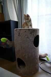 急遽、猫よけグッズ購入す - 猫とオヤジの静かなる日々