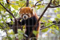 夢見ヶ崎動物公園にて~見つめられる - 柳に雪折れなし!Ⅱ