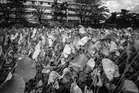 秋田駅前あたりをぶらぶらと - photolog-ミヤコワスレ
