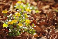 10/28庭で小さい秋を見つけよう - 空 -Sora-